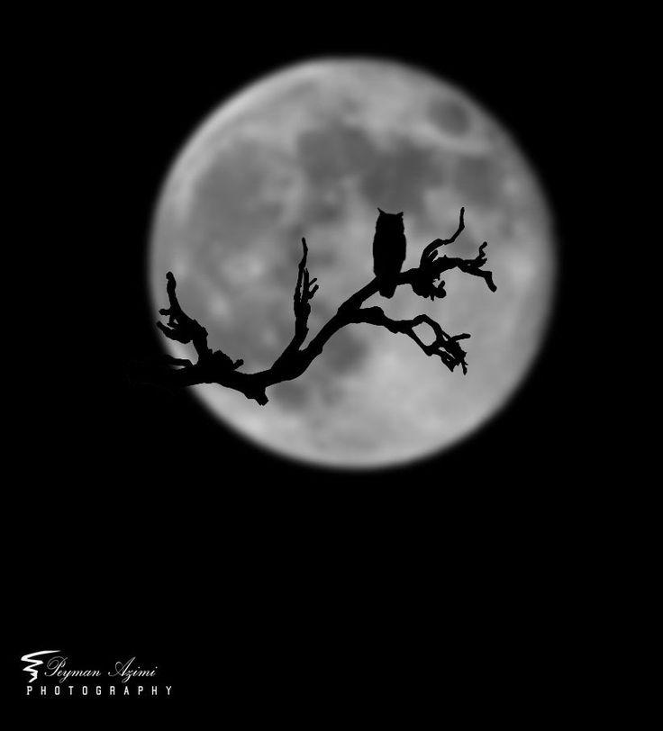 Черно-белая луна картинки