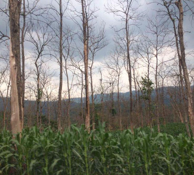 somewhere near randudongkal central java