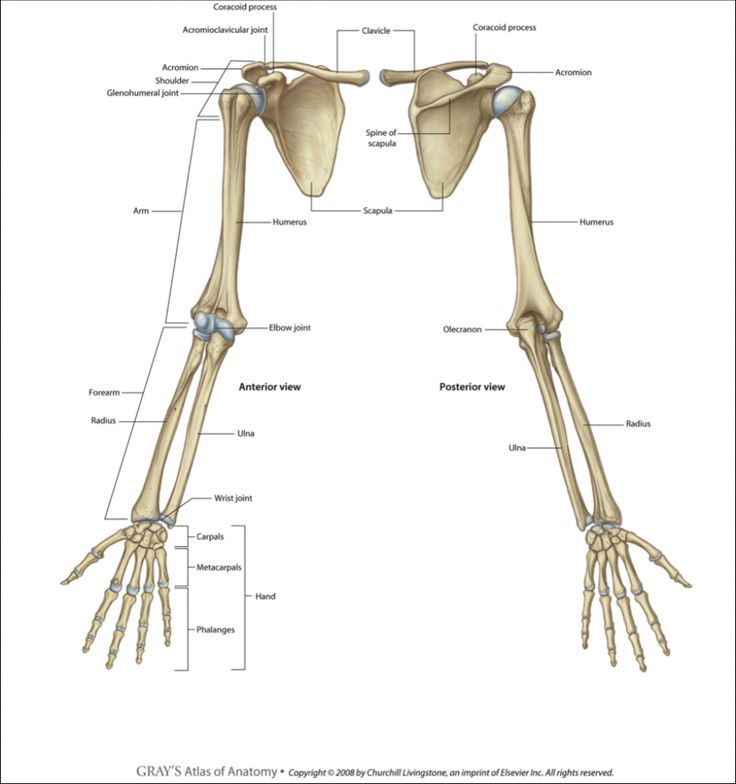 muscles of upper limb pdf