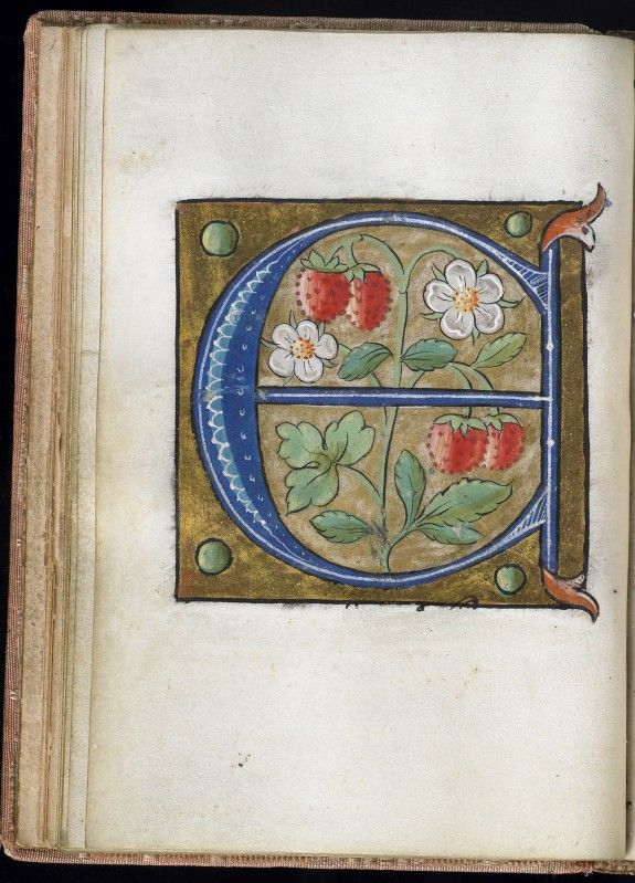 Leaf from Alphabet Book.  The Letter E.  16th Century Manuscript.  Would make a great embroidery.