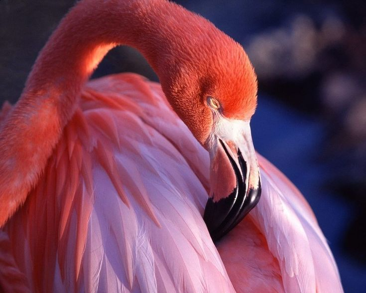 38 best Flamingo images