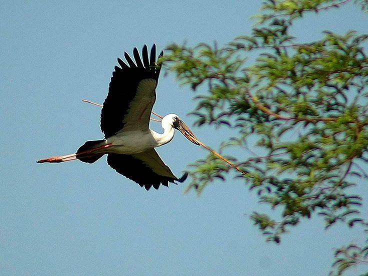 Flora and Fauna of Bihar, India @ Sanctuariesindia.com
