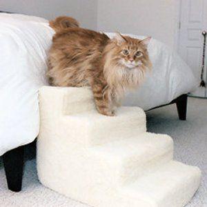 escalier-chat