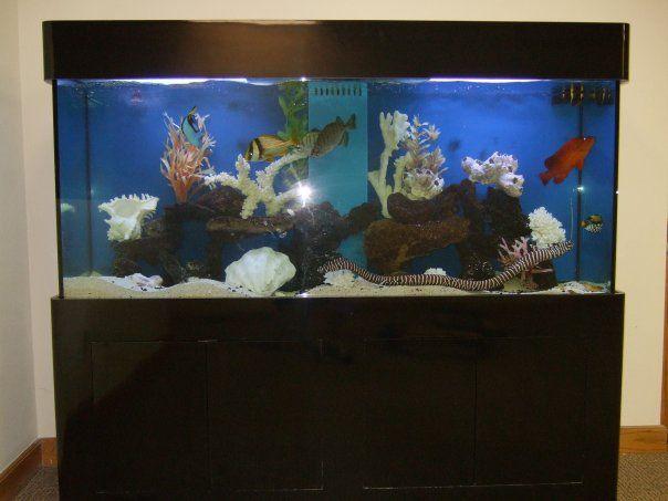 Fun eel in this clean modern salt water aquarium fish for Fun fish tank
