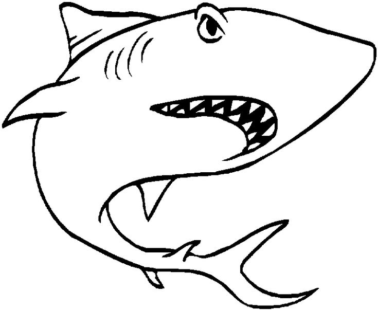 How Draw Great White Shark Step