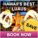 Maui luau - How to decide which is the best luau in Maui for your own needs and budget. Details about hula shows, foods, reviews and descriptions of specific luau choices in Maui Hawaii