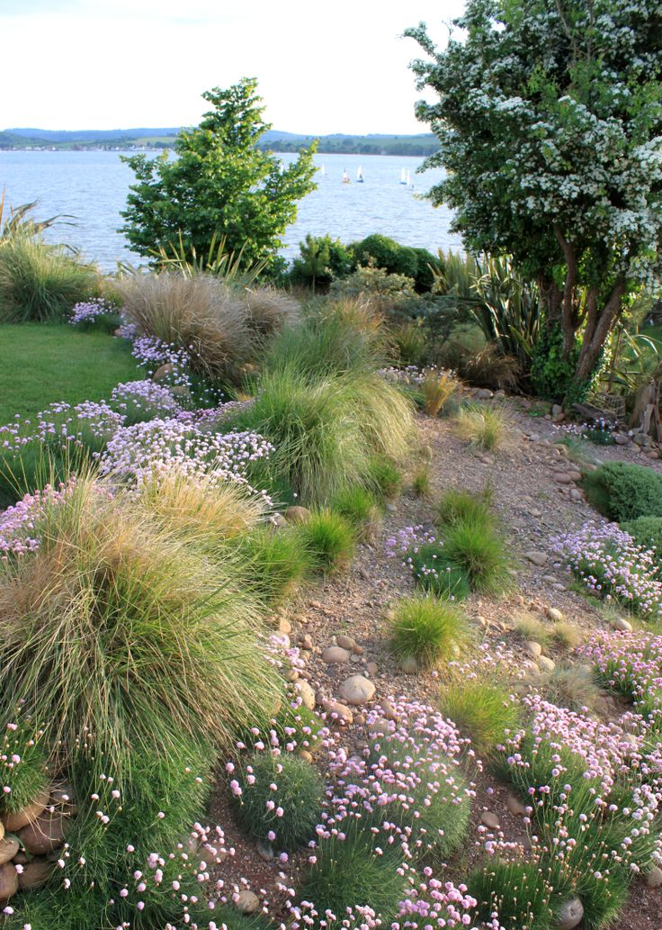 In the garden at The Lookout, Lympstone banks of hummocky ornamental grasses including Stipa & Anemanthele evoke the sand dunes at the mouth of The Exe Estuary nearby. Open for the NGS on the 6th & 8th of June 2014. www.ngs.org.uk