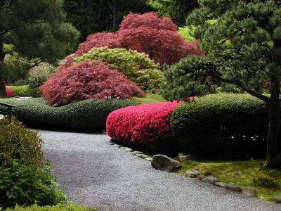 Japanese garden pruning.