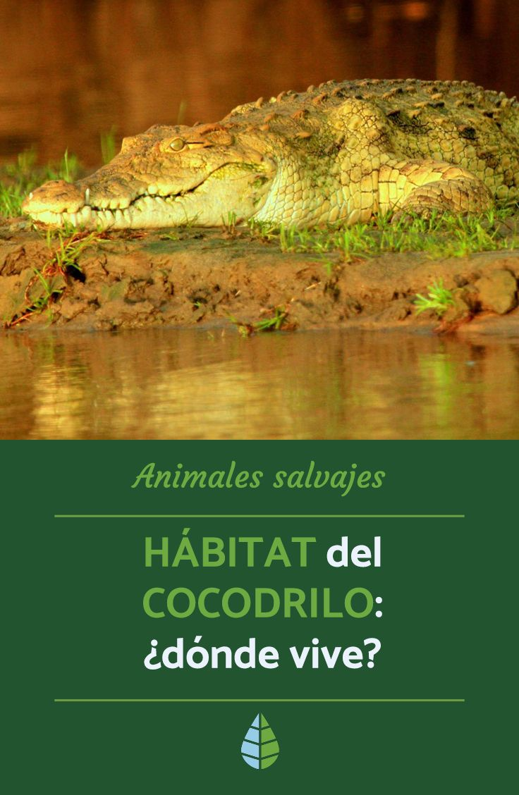 Hábitat Del Cocodrilo Dónde Vive Cocodrilo Donde Viven Los Cocodrilos Habitat