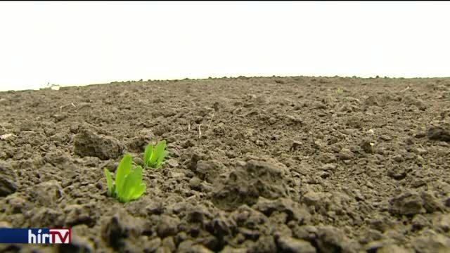 A több kézen átfutott földterület végül átminősítés útján került a cég érdekeltségébe.