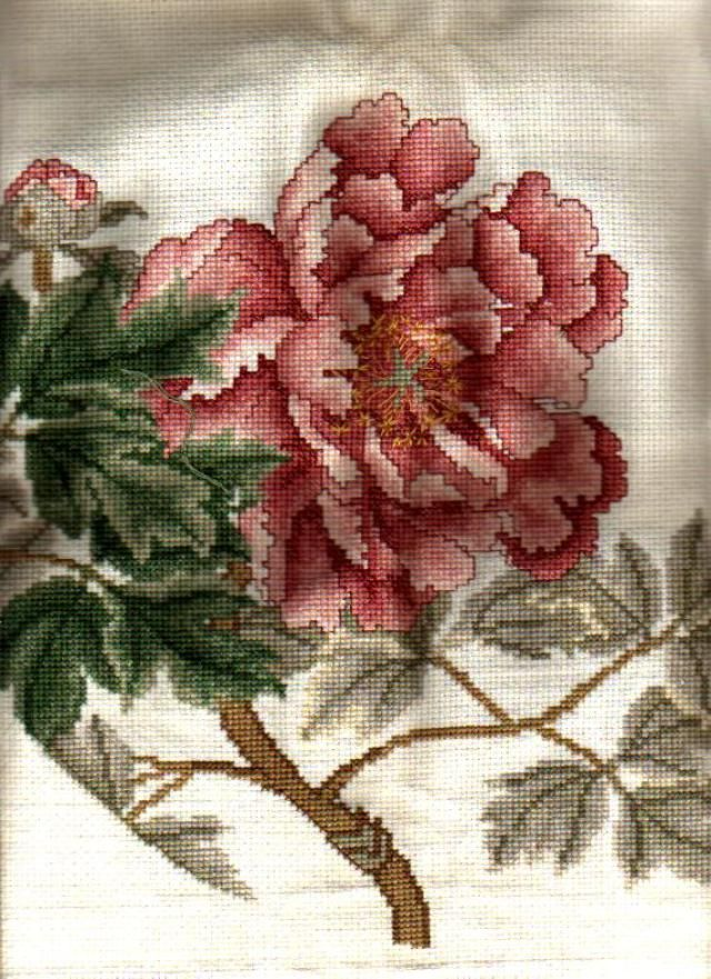 Cross Stitch Photo Album II: Ming Peony (Front) - Stitched and Submitted by Just another stitcher