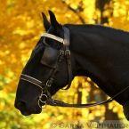 Koně   Šárka Veinhauerová