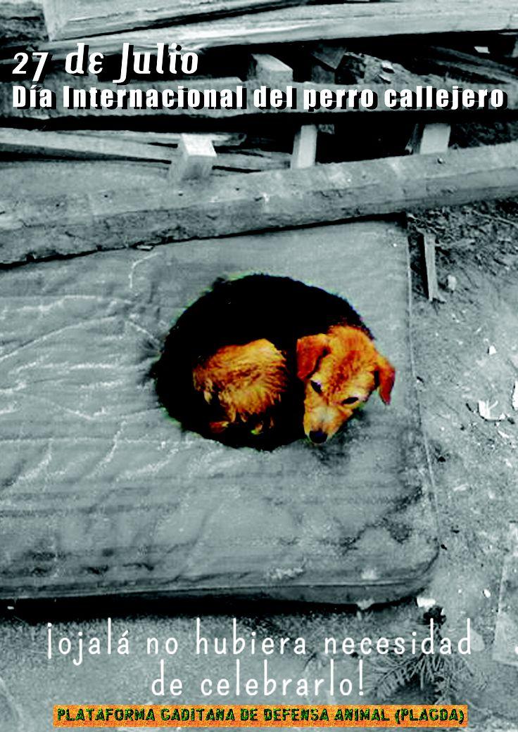 Día internacional del Perro callejero. 27 de Julio.. Ojalá no hubiese necesidad de festejarlo.. y todos pudieran tener un hogar!