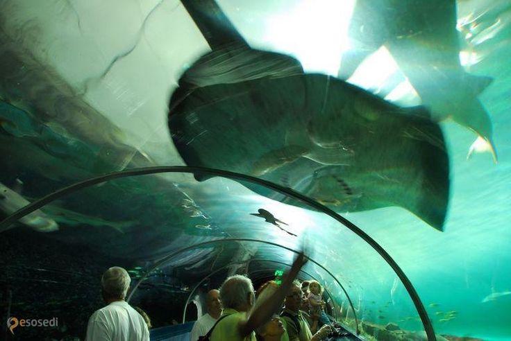 Сиднейский Аквариум – #Австралия #Новый_Южный_Уэльс (#AU_NSW) Одна из главных достопримечательностей австралийской столицы - Сиднейский аквариум, входящий в число крупнейших в мире.  ↳ http://ru.esosedi.org/AU/NSW/1000103274/sidneyskiy_akvarium/