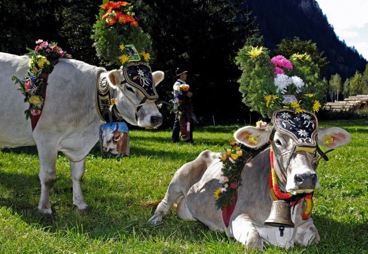 LA DESMONTEGADA - La tradizione del Primiero in Festa « Hotel Cima Rosetta: San Martino di Castrozza