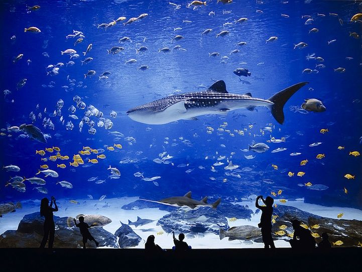 The World 39 S Largest Aquarium Beluga Whale Whales And Sharks