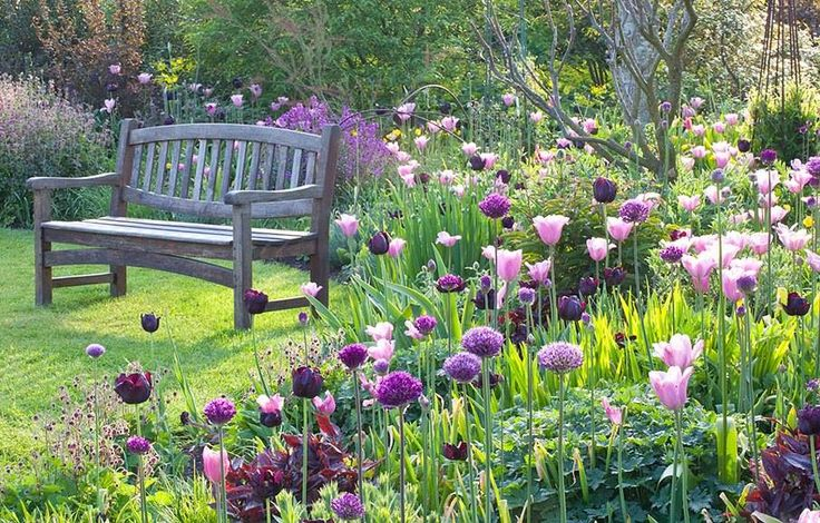Tulips and alliums in Merriments Gardens, East Sussex -