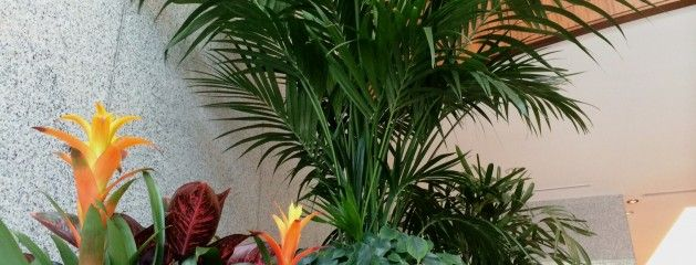 About Us Tropical Sensations Plantscaping For Interiors