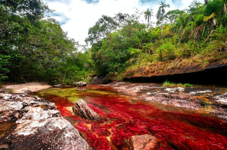 Caño Cristales, 'the liquid rainbow of the world,' is one of the most beautiful rivers in South America. You can take a swim down the river and have fun.