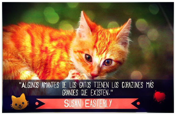 Citas sobre Gatos!