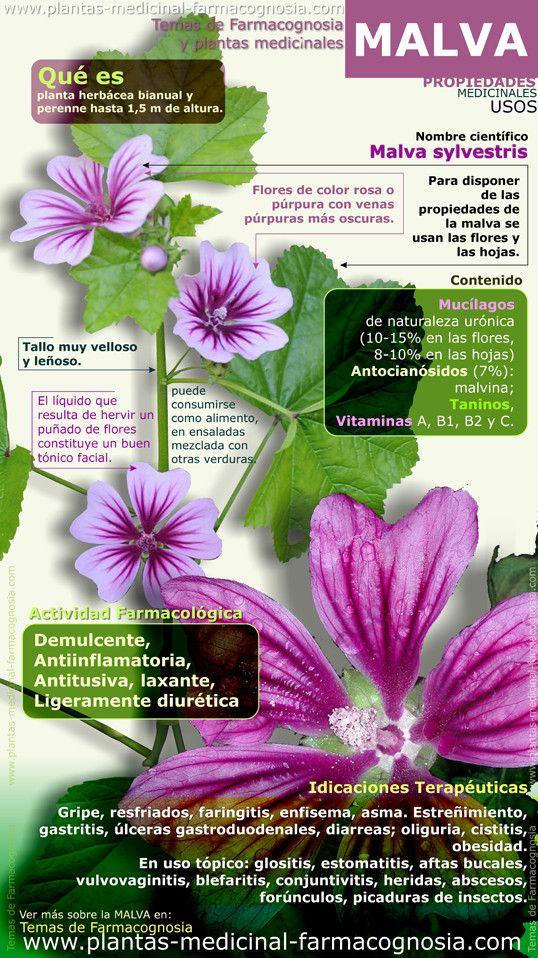Infografía. Resumen de las características generales de la planta de Malva. Propiedades, beneficios y usos medicinales más comunes de la Malva sylvestris.