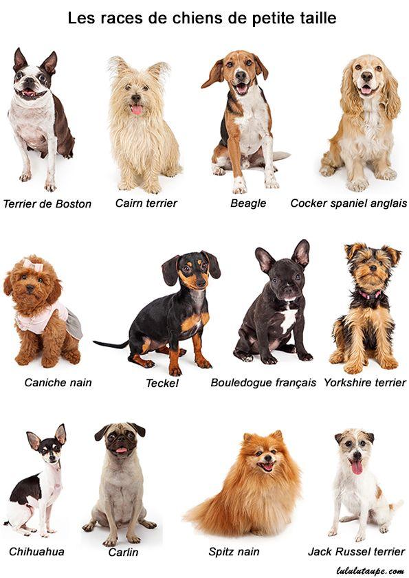 Best 25 chien de petite taille ideas on pinterest photo trop mignonne pho - Tonnelle petite taille ...
