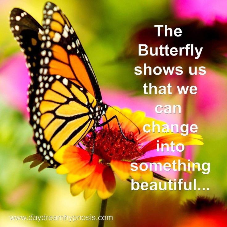 The butterfly shows us that we can change into something beautiful... www.daydreamhypnosis.com  #meditation #mindfulness #innerpeace #powerofnow #spiritual #awareness #consciousness #enlightenment #inspiration #inspire #hypnotized #hypnosis #hypnotic #hypnotist #hypnotherapy #hypnotherapist #hypnotism #Huddersfield #westyorkshire #possibilities #positive
