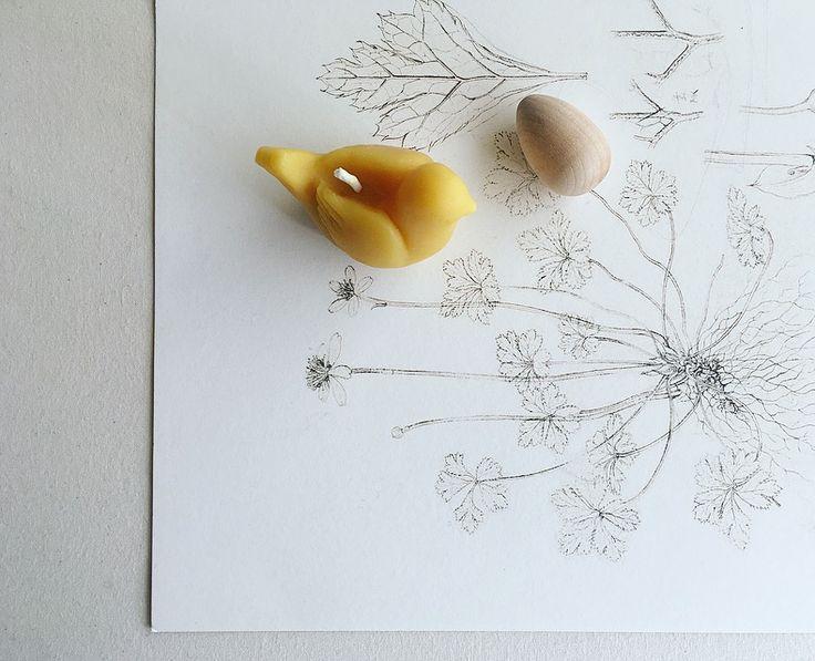 鳥のろうそく #蜜蝋 #candle #新月の夜のろうそく会 #eggs #植物画