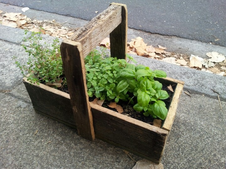 Cafe foothpath herb garden #Fairfield #Northcote border #NoHe