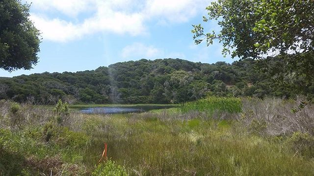 Welcome to Jurassic Park...jk #thisismyswamp #seaside #fortord #work #marinalocals #montereybaylocals - posted by Mitchell Jacob Ramirez https://www.instagram.com/mitch3ll_jram - See more of Marina, CA at http://marinalocals.com