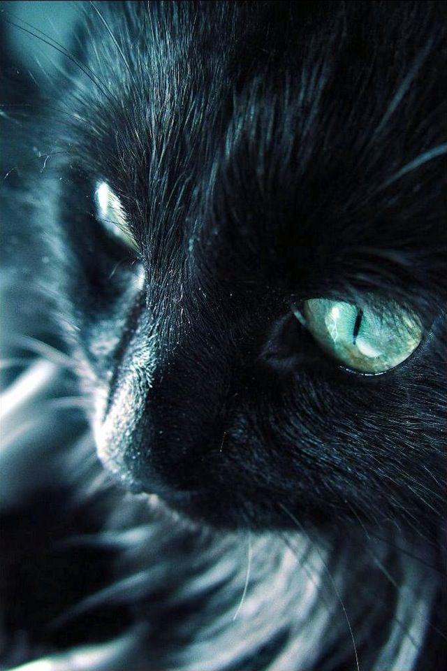 Looks like Blackie!