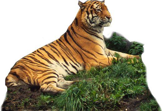 De WNF-Rangerclub | de grootste wilde dierenclub van de wereld.