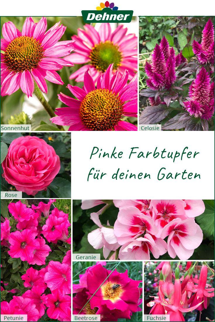Pinke Pflanzen Fur Deinen Garten Balkon Pflanzen Pflanzen Geranien