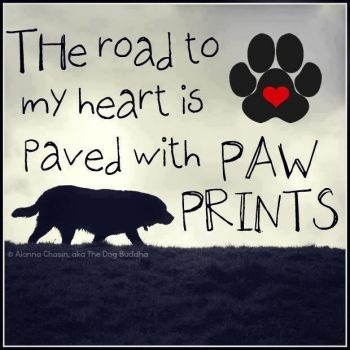 Dedicated to pet lovers