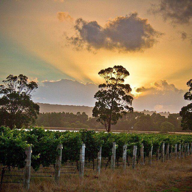 Cape Mentelle Winery, Margaret River Western Australia.
