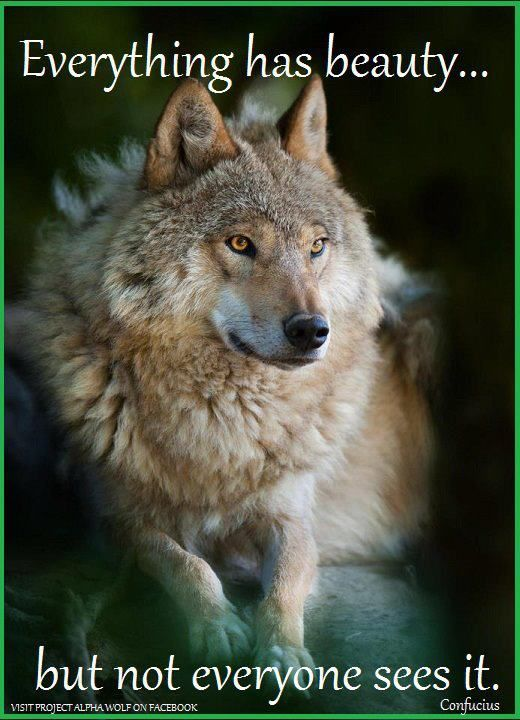 wolves are beautiful animals Cute AnimalsMake Me Smile