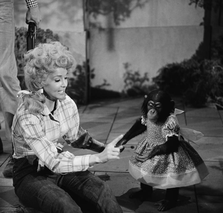 29 Best Images About The Beverly Hillbillies On Pinterest Lester Flatt Irene Ryan And The Mansion