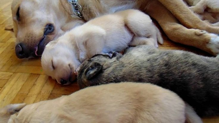 Dreaming puppies 2