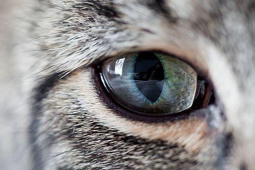 Cats eye: Cat Wallpapers, Amazing Cat, Eye Cat, Cat Eye, Cat Diamonds, Kitty Kitty, Animal Awkward, Cat Close, Beautiful Eye