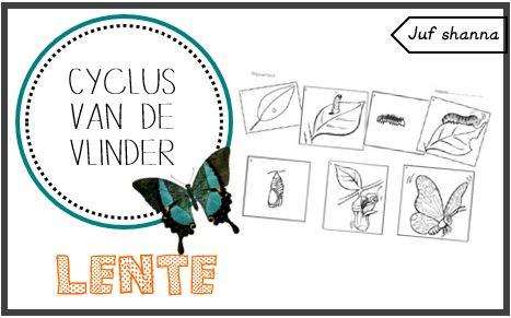 Thema lente: werkblad cyclus van de vlinder