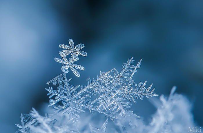 何一つとして同じ形はない雪の結晶。 見とれるくらい美しい自然の造形美。  その一瞬を浅井さんは逃しません。