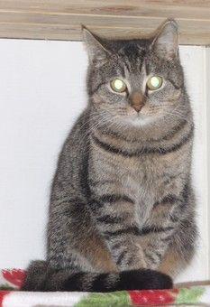 Adopsjon katter - Dyrebeskyttelsen Norge avd. Drammen og omland
