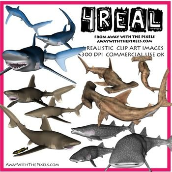 4 Real! Realistic Shark Clip Art - Hammerhead, Blue, Whale and more! Realistic animal clip art for teachers! OK to make resources to sell on TPT - clip art OK for digital whiteboards too!