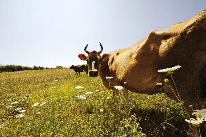 Terra dei fuochi allarme smentito: sono 33 gli ettari contaminati