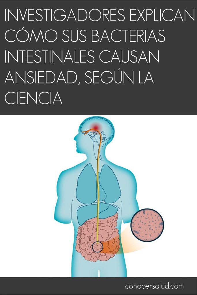 Investigadores explican cómo sus bacterias intestinales causan ansiedad según la ciencia #salud