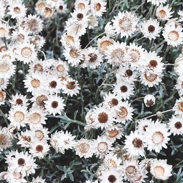 🌻  #flowers #botanical #plants #garden #motif #photography