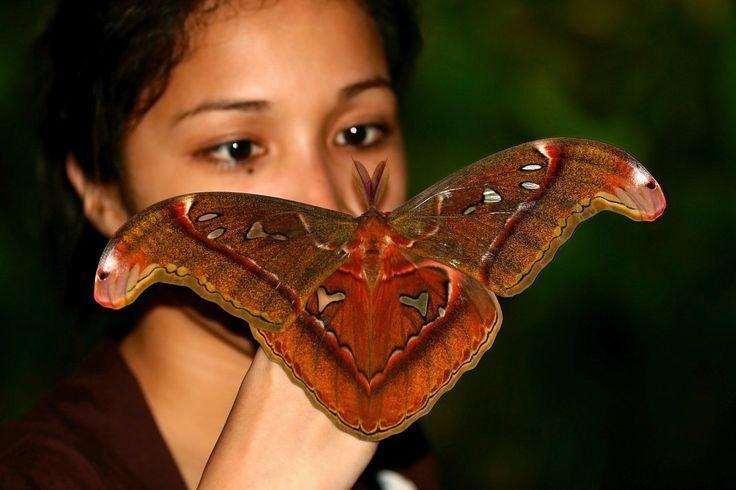 venezuelan poodle moth pics | Venezuela poodle moth...kinda cute ...
