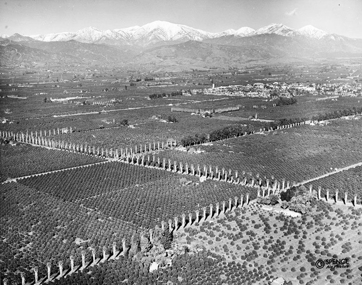 Orange groves near Covina, circa 1941.    Part of the California Historical Society Collection in the USC Digital Library.