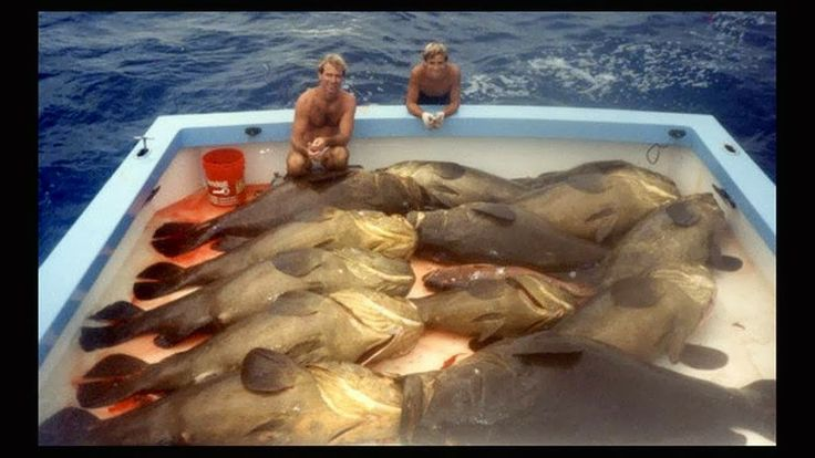 8 best overfishing pictures images on pinterest the for Fishing jobs in florida