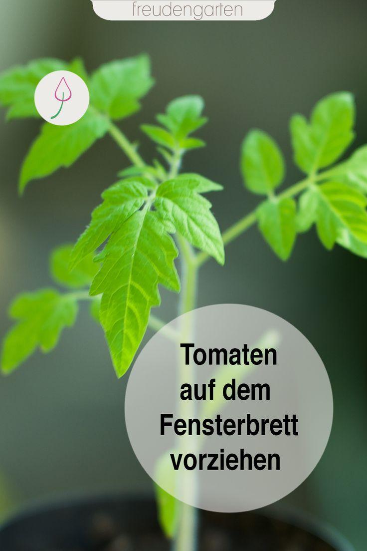 Tomaten Aussaen Tomaten Garten Tomaten Pflanzen Tomaten